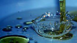 experiment petri